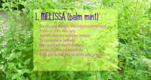 Healthy-Herbal-Tea-Recipe.-Organic-gardening